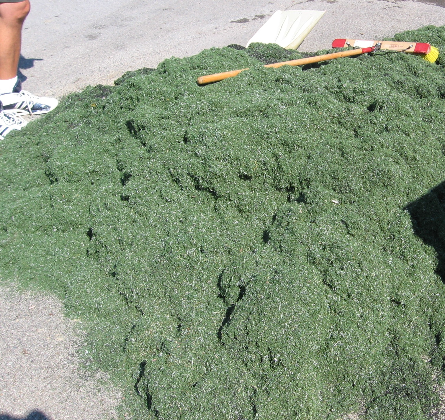 Broken fibers, dirt, fines, and other debris will be removed from your turf.